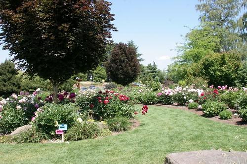 Adelman Peony Gardens