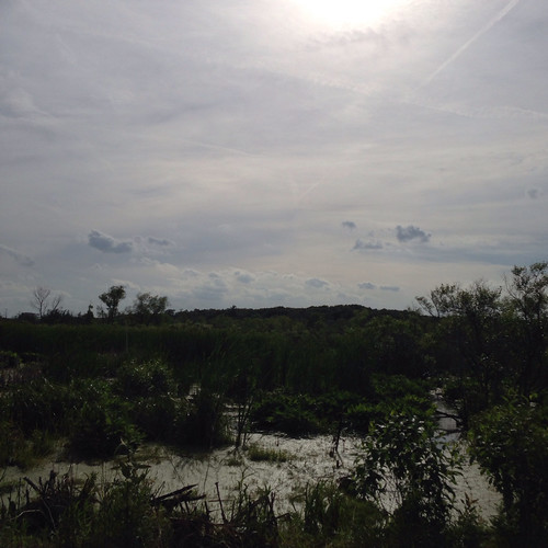 Indiana Dunes National Lakeshore: swamp as seen from road