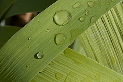 leaf, macro photography, green, close-up,