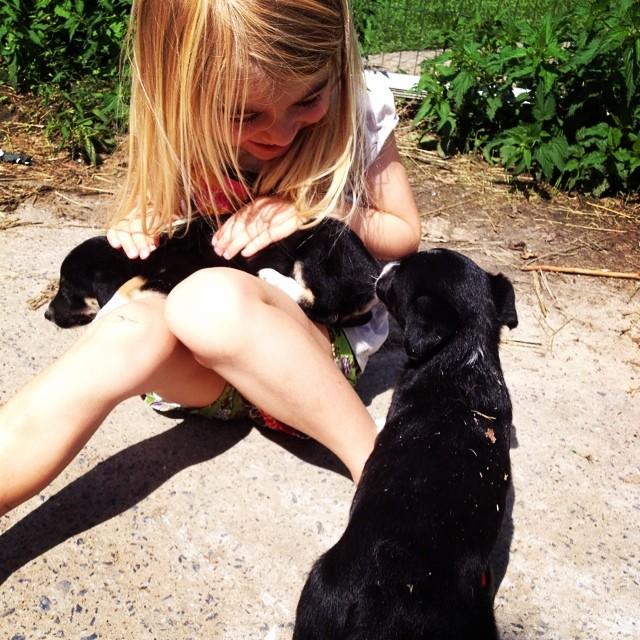 Dag 17: pups pups pups all around! #67daysofsummer