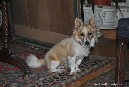 Mon, May 12th, 2014 Lost Male Dog - Main Nobber Kingscourt Road, Nobber-kingscourt, Meath