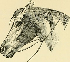 """Image from page 81 of """"The standard horse book, comprising the taming, controlling and education of unbroken and vicious horses"""" (1895)"""