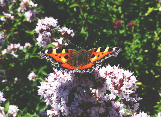 3 butterfly bee garden tour uk vivatramp lifestyle book blog uk