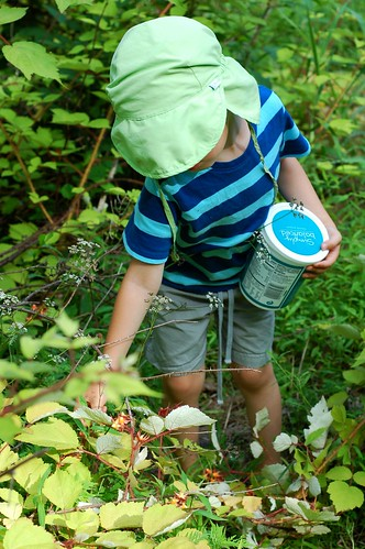 Picking wild wineberries by Eve Fox, The Garden of Eating, copyright 2014