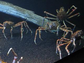 Sea Spiders??