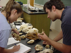 Auburn University students study mammal specimens in Troy Best's lab.
