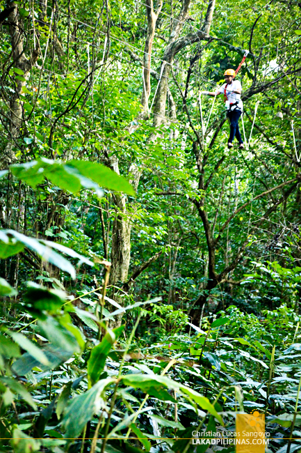 Treetop Adventure at the Chocolate Hills Adventure Park (CHAP)
