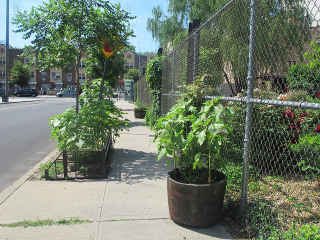 Greenest Block in Brooklyn 2014