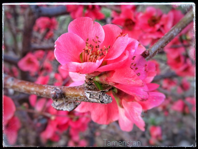 Pretty in pink., Canon POWERSHOT SX610 HS