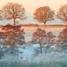 Trees at Dawn by midlander1231