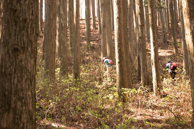 20160430-鳴神山-0300.jpg