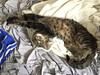 She stretch. - The Caturday