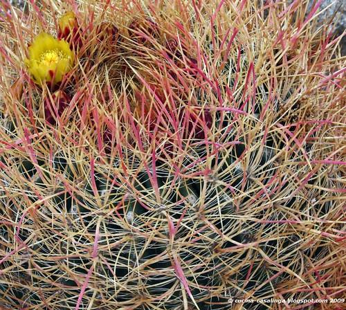 Kaktus gelb klein copyr