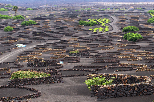 Vineyard, Lanzarote, Canary islands