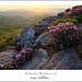Spring Pinnacle by DKNC