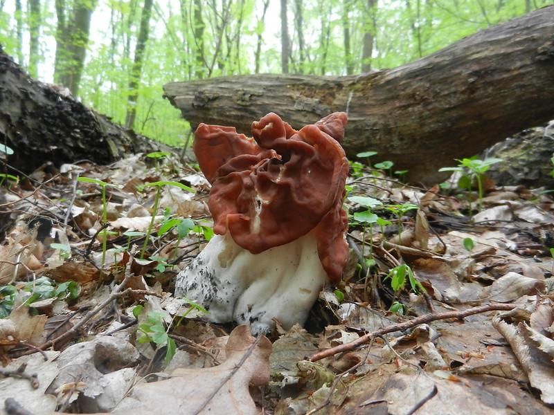 Голосеевский лес