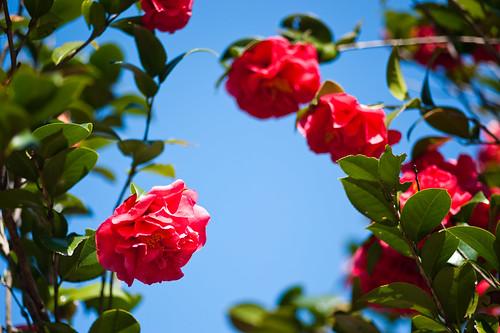 陽明山花卉試驗所-11