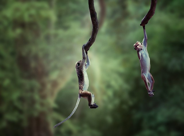 Playful Little Monkeys