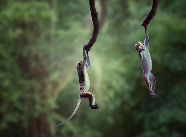 Playful Little Monkeys