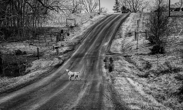 """The Wanderer Dog Walking"" Goode, Virginia (USA)"