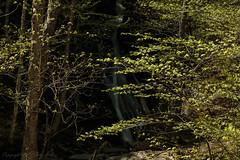 VT_Waterfalls-1270
