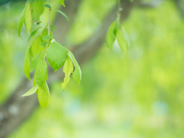 雨と新緑 - GXR -