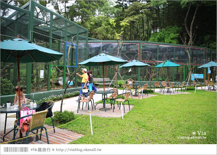 【新竹景點推薦】森林鳥花園~親子旅遊的好去處!在森林裡鳥兒與孩子們的樂園31