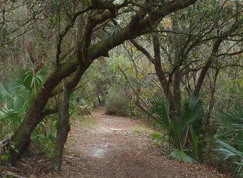 tree florida stuart trail covered halpatiokee