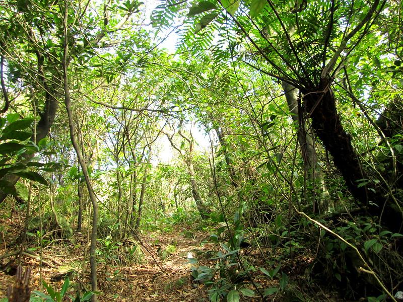 繼續走下去的景色就像走進一個小森林。