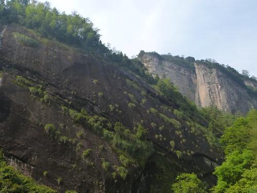 Fujian-Wuyi-Shuillandong-Dahongpao (11)