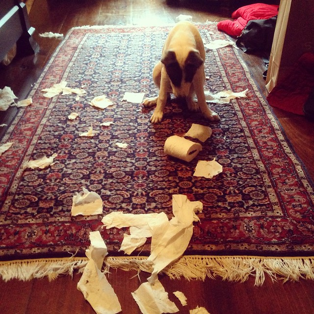 Rocket Attacks The Toilet Paper Monster