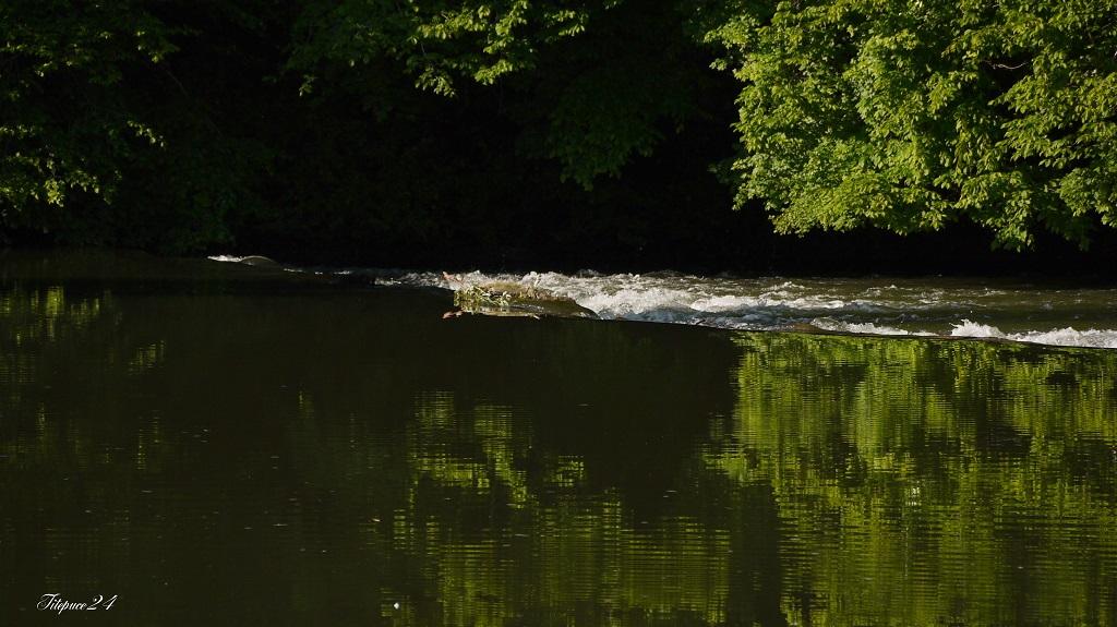 Pêcheur sur le petit barrage de l'Isle- Périgueux et les pêcheurs qui déjeûnent  14215236174_9eb821113c_o