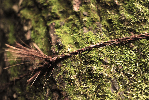 Tree rope
