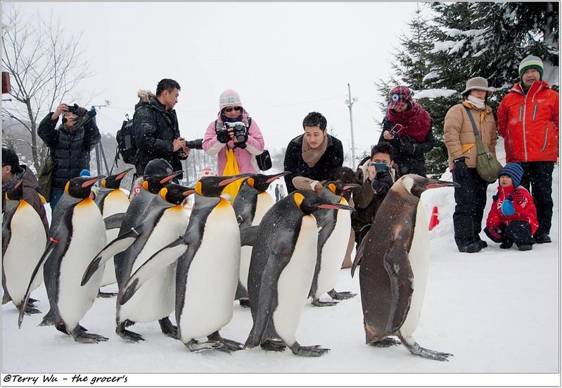 Day5 - 旭山動物園 - 企鵝散步-66