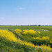 Dutch Field by lynnlin