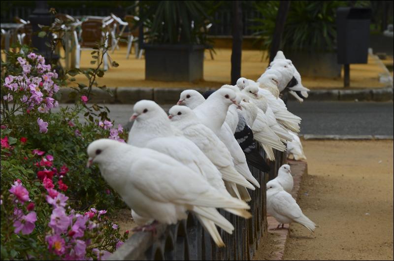 Sevilla_0074