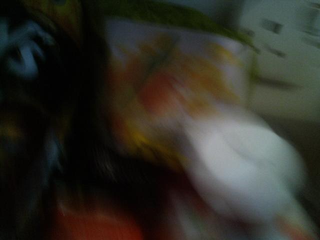 PIC_1293