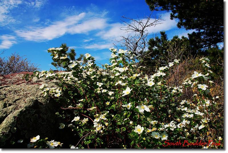 Boulder Raspberry 9