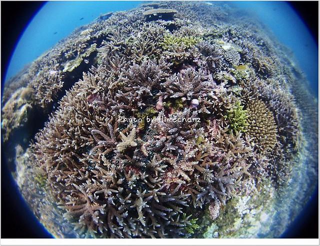 サンゴがとっても美しい!