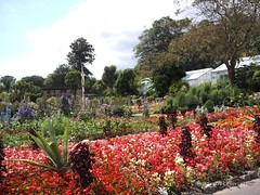 Botanical Gardens Singleton Park  Swansea 15th July 2014 (117)