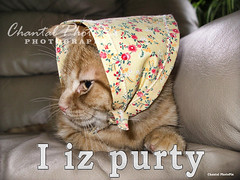 i iz Purty ~ Tabby Kitten wearing a Hat