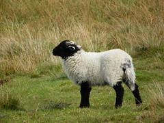 lamb spring 2014
