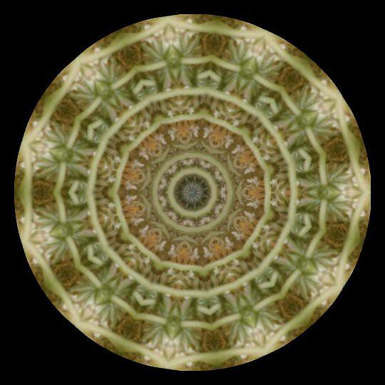 201105150334-umbel-Krazydad-kaleidoscope