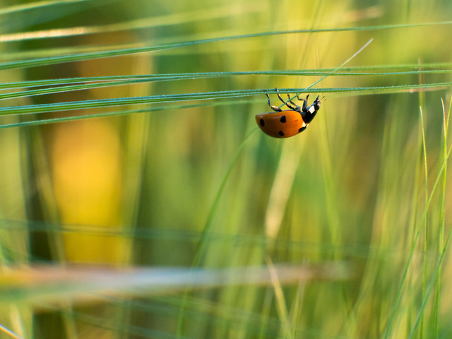 The world of a ladybug