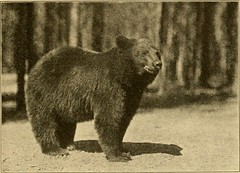 """Image from page 50 of """"The top of the continent; the story of a cheerful journey through our national parks"""" (1917)"""