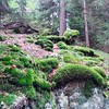Forest in Upper Austria carpeted in a dense mix of moss, creepers, mulch and mycelium. #Austria