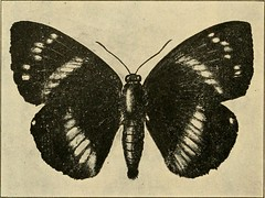 """Image from page 263 of """"A manual of dangerous insects likely to be introduced in the United States through importations"""" (1917)"""