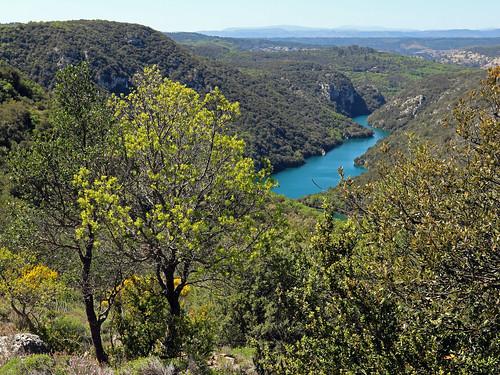 canon nature paysage verdon arbre forêt provence rivière eau