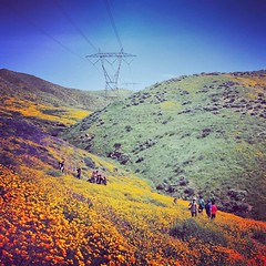 Poppies Blooming #hiking #nature #california #lakeelsinore #flowers #outdoors