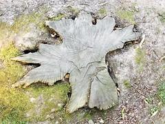 Tree stump tree